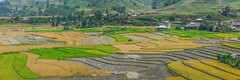K2943-45.0912.Lm Mng.Cao Ph.M Cang Chi.Yn Bi (hoanglongphoto) Tags: homes panorama canon asian asia village dale outdoor terraces harvest vietnam mountainlandscape phongcnh ynbi mountainouslandscape vietnamlandscape ngoitri tybc phongcnhvitnam canoneos1dsmarkiii chu vietnamnorth ngnam magt rungbcthang mcangchi thunglng bnlng canonef70200mmf28lisiiusmlens lachn caoph lmmng thunglnglmmng nhngnginh vietnamterraces phongcnhrungbcthang phongcnhynbi phongcnhvngni phongcnhmcangchi rungbcthangvitnam