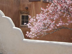 The Look of the Southwest (suenosdeuomi) Tags: newmexico santafe window fence spring blossoms canons90