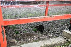 Today's Cat@2016-04-11 (masatsu) Tags: cameraphone apple cat iphone catspotting thebiggestgroupwithonlycats spftbank