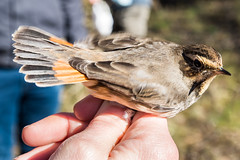 Birds (Mito Fierro) Tags: espaa palencia fuentesdenava