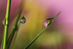 Hidden in the green (Marilena Fattore) Tags: light macro green nature water grass closeup drops focus artistic fantasy tamron floralart canan