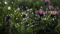 Blingland (jurgenkubel) Tags: flower bling blume blte bluma