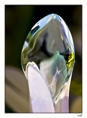 Art Déc'Eau - Oeuf d'eau (Nadine.Dvx) Tags: macro water eau abstraction création gouttedeau waterdropmacro nadinedvx
