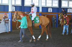 "2016-01-03 (93) r9 Caitlyn Stoddard on #5 Tough Weather (JLeeFleenor) Tags: photos photography md marylandracing marylandhorseracing laurelpark jockey جُوكِي ""赛马骑师"" jinete ""競馬騎手"" dżokej jocheu คนขี่ม้าแข่ง jóquei žokej kilparatsastaja rennreiter fantino ""경마 기수"" жокей jokey người horses thoroughbreds equine equestrian cheval cavalo cavallo cavall caballo pferd paard perd hevonen hest hestur cal kon konj beygir capall ceffyl cuddy yarraman faras alogo soos kuda uma pfeerd koin حصان кон 马 häst άλογο סוס घोड़ा 馬 koń лошадь femaleathletes femalejockey chestnut maryland"