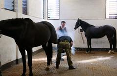 The Forge (cerebellah) Tags: horses forge horseguards hydeparkbarracks bluesandroyals thehouseholdcavalrymountedregiment farriermajor