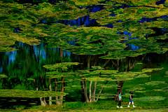 Walking in the Park (David Guidas) Tags: park blue trees people sun west green water reflections walking virginia spring pond warmth velvia fujifilm algae flipped oglebay xt10