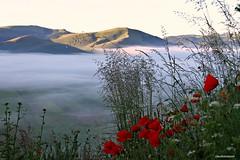 (claudiophoto) Tags: summer italy mountains nature fog landscapes poppy nebbia colori atmosfera sibillini parconazionale montisibillini naturelife castellucciodinorcia landscapephoto paesaggiitaliani landscapedreams paesaggiumbri paesaggidimontagna