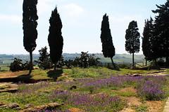 Agrigento - L'albero sbilenco (valerologan) Tags: sicily albero sicilia agrigento valledeitempli