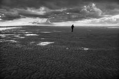 One man and his dog (tabulator_1) Tags: dog beach coast crosby crosbybeach