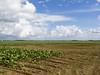 Agriculture field (yoelisd2003) Tags: flowers sky orange flores color green clouds 50mm florida olympus punkin floridaeverglades calabasas naranjas sembradio olympus50mm floridabirdingtrail olympus1260mm olympusem1 olympusomdem1