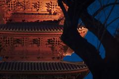 Five-storey Pagoda / TOKYO JAPAN (lotus708) Tags: japan night tokyo fuji fujifilm xe1 samyang 1485mm