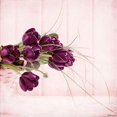 Dark purple tulips (Ro Cafe) Tags: pink flowers stilllife purple tulips tabletop textured nikond600 nikkormicro105f28