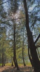 Bliss. (rishabhshetty97) Tags: trees sky sun nature canon scenic greenery canopy bliss 600d