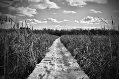 Someday I Will Take the Path Less Traveled (Silverio Photography) Tags: winter blackandwhite snow nature photoshop canon lens blackwhite path newengland elements suburb pancake 24mm hdr topaz adjust massachuetts 60d