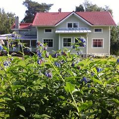 Koti / home. #koti #home #summer... (Matti Airaksinen) Tags: summer home finland koti kangasala uploaded:by=flickstagram instagram:photo=1031697946492069243302847616
