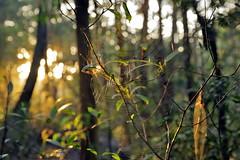catching the morning light (alden0249) Tags: sunrise australianlandscape cobwebs australianwildlife