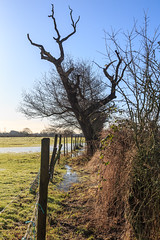 Frosty morning (alh1) Tags: york england footpath northyorkshire haxby