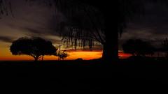 Los rboles de Victoria a Contraluz (Govinda John) Tags: canon contraluz atardecer arboles paisaje puestadesol naranja