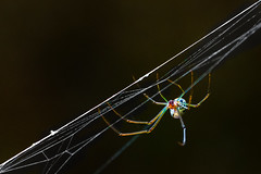 Colors (morel_sergio) Tags: blue red color macro green nature colors spider natureza small macrophotography nikond7000