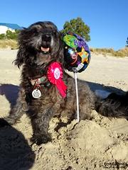 DSC03509-1 (ScootaCoota Photography) Tags: birthday dog beach animal mutt
