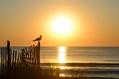 (NataThe3) Tags: ocean summer sky sun nature water waves outdoor seagull nj longbeachisland waterscape beachhaven