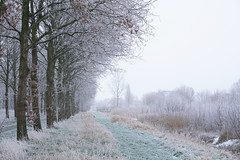 (esmeecadoni) Tags: morning trees winter light sky white holland ice nature netherlands forest landscape photography woods europe outdoor sony minimal simplicity simple minimalistic drenthe littlethings beautifulearth