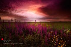 Early Summer Flowers (AleshaOleg) Tags: travel flowers light sunset summer sky sun flower water beautiful field clouds landscape purple bulgaria