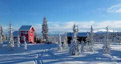 Little red cabin - Alaska (JLS Photography - Alaska) Tags: winter red snow color colour alaska america landscape landscapes cabin colorful outdoor wilderness winterlandscape lastfrontier alaskalandscape jlsphotographyalaska