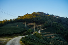 Tea Garden on the mountain (Norman Hsiao) Tags: sunset color garden colorful view tea sony taiwan  puli 2870mm a7ii