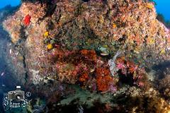 Seven Sisters (ShaunMYeo) Tags: scubadiving reef gibraltar sevensisters calpe underwaterphotography  gibilterra ikelite      gibraltr  cebelitark gjibraltar ibraltaro hibraltar xibraltar giobrltar gibraltrs gibraltaras ibilt