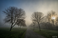 Morning Fog  (T.ye) Tags: trees sunlight mist tree fog outside outdoor smoke todd ye lanscape