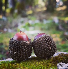 Happy Valentine. #lebanon #samsung #Note4 #oak #Love (A. Saleh) Tags: lebanon nature nikon saleh asaad instagram ifttt