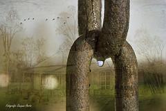 Waterdrop (jacqaar) Tags: texture water waterdrop chain ketting waterdruppel