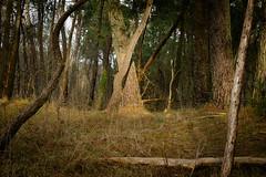 ~ (vieubab) Tags: nature branches hiver arbres paysage extrieur chemin fort bois calme feuille feuillage feuillesmortes branchage luminosit