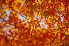 20160312_190_SIGMA dp1 Quattro real world samples (foxfoto_archives) Tags: world japan by real tokyo photo sigma snap chiba sample pro   saitama samples developed foveon quattro   dp1 spp   632 dp1quattro dp1q spp6 spp63 spp632