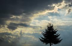(neerod81) Tags: light tree pine clouds dark spring minimalism sunrays skydrama