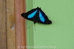 Argentinien_Insekten-60 (fotolulu2012) Tags: tierfoto