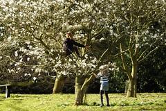 1223-23L (Lozarithm) Tags: people p900 magnolias treeclimbing bowood derryhill 242000