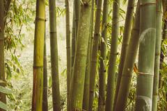 (c) Wolfgang Pfleger-2442 (wolfgangp_vienna) Tags: mountains rain trekking asia asien tour bamboo vietnam regen sapa bambus