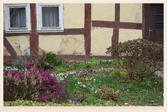 Blumenbeet (ute_hartmann) Tags: