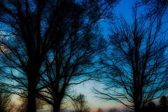 Dusk (skribblechris) Tags: blue blur color tree nature contrast outdoors dusk sunsetting