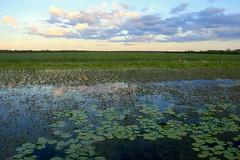Mamukala Wetlands (rachFNQ) Tags: sunset sky nature beautiful clouds skyscape nationalpark scenic australia scene unesco wetlands lillies kakadu worldheritage northernterritory naturephotography kakadunationalpark wetseason mamukalawetlands