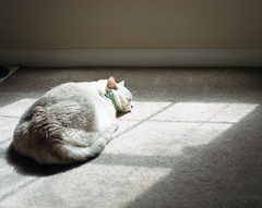 Mimmers sun bathing (josuerodriguez1992) Tags: 120 mamiya cat mediumformat 120film portra rz67 portra400 110mm