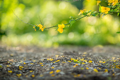 Intimate Places (Elizabeth_211) Tags: flowers green nature floral yellow bokeh 135mm