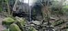 trova la tua strada (filippo.bassato) Tags: panorama canon natura cielo roccia sassi sentiero muschio collina cascata incontaminato cascatella eos40d schivanoia campagnaveneta filippobassato
