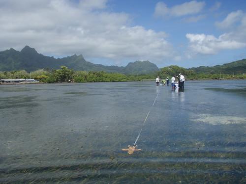 Indo-Pacific SeagrassNet site