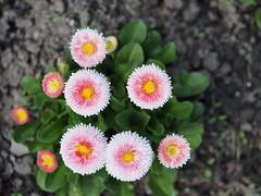 mozirski-gaj_07 (carlo) Tags: flowers olympus slovenia slovenija fiore botanicalgarden omd em1 ortobotanico giardinobotanico mozirje mozirskigaj