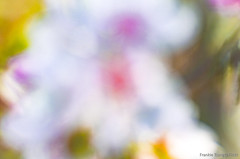 DSC_8545 (Frankie Tseng ()) Tags: park pink flowers sunset sky bw flower silhouette photography 50mm blackwhite nikon outdoor flash sunny tokina cherryblossoms fade nikkor 70300mm tamron 90mm f8 1224mm f28 f4 1870mm bwphotography blackwhitephotography portraitphotography outdoorportrait sb900 yongnuo outdoorportraitphotography yn568