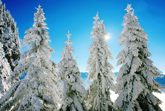 die Sonne (welenna) Tags: schnee winter sun snow switzerland alpen sonne tanne