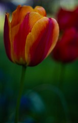 p2 one focal length-3 (davidkerns12) Tags: flowers 2 one class photoraphy focallength